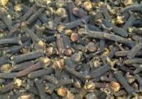 שמן ציפורן שלוס - Clove bud