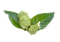 נוני - Noni - Morinda Citrifolia של שלוס